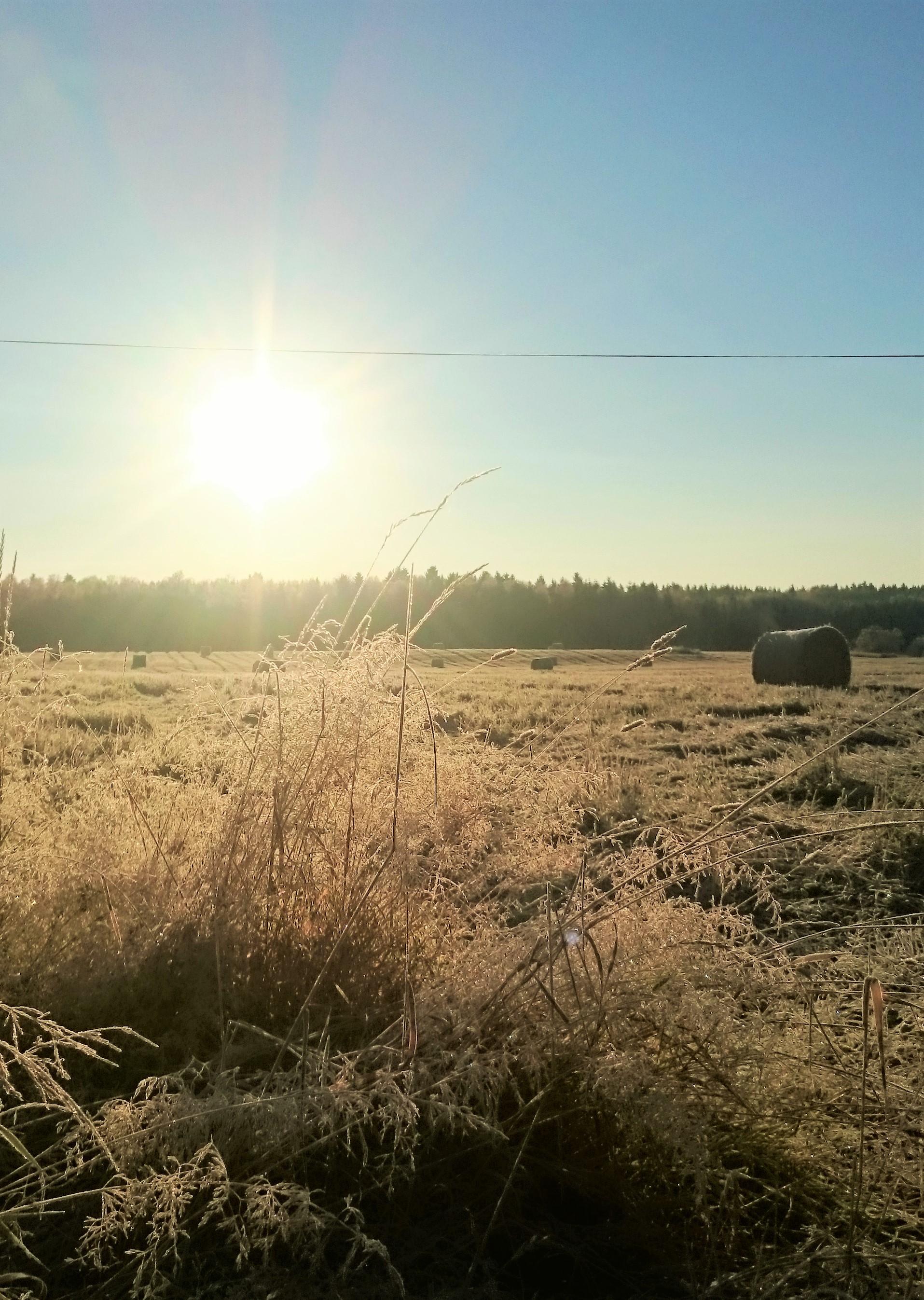 Solen skiner en frostmorgon