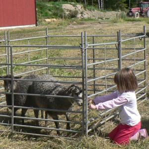 Gårdscafé och loppis på Fallängetorp lantgård.