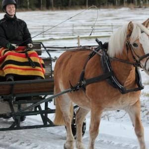 Häst och vagn i Fallängetorp.